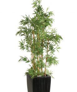 Bambusz fa